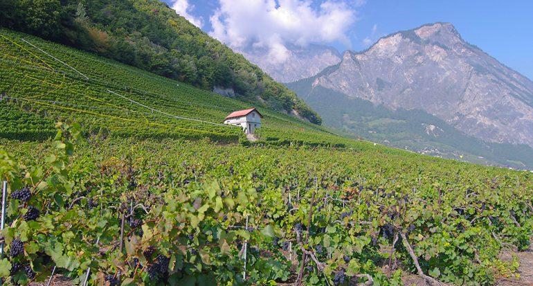 ¿Te gustaría visitar el viñedo más chiquito del planeta?