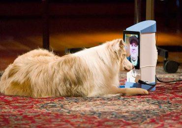 ¿Tu perro te reconoce en teléfonos y tabletas?