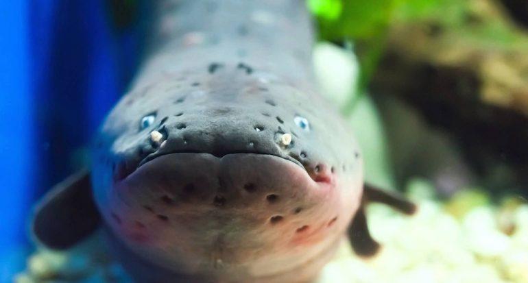 ¿Una anguila puede encender un bombilla de luz?