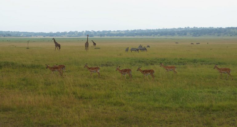 África para principiantes: el Parque Nacional de Akagera