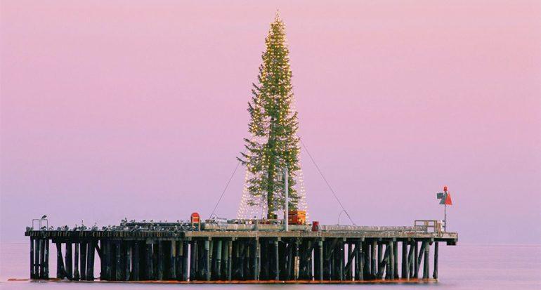 Árboles de Navidad de todo tipo