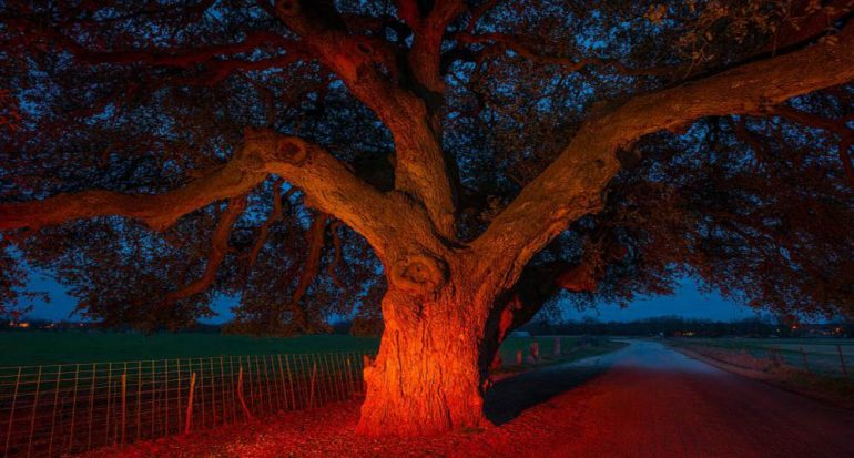 10 árboles con grandes historias que contar