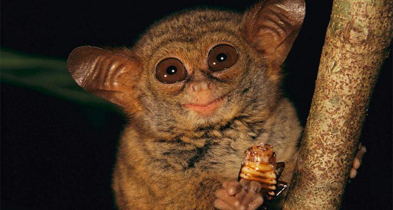 10 criaturas sorprendentemente encantadoras