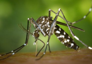 fiebre Chikungunya