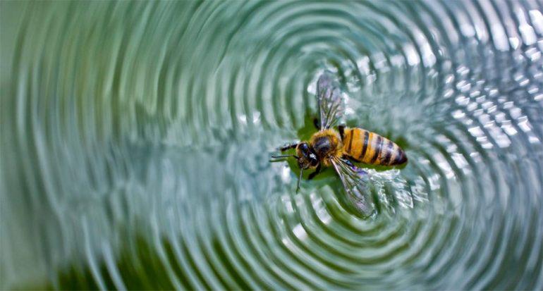 10 deleitosas fotografías de abejas