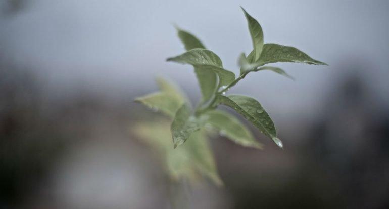 10 formas de reducir tu huella de carbono