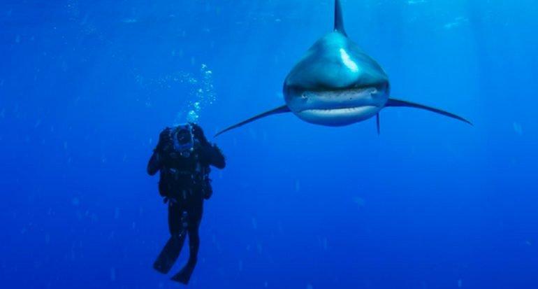 10 fotos escalofriantes de tiburones
