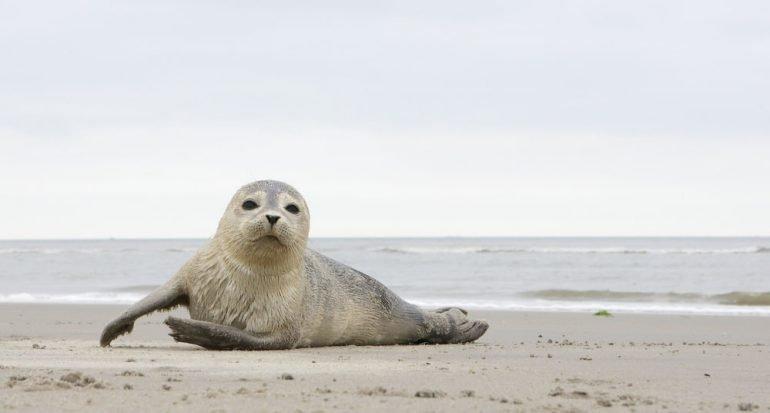 12 especies de focas que tal vez desconocías