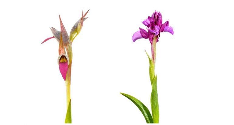 12 fotos coloridas de orquídeas