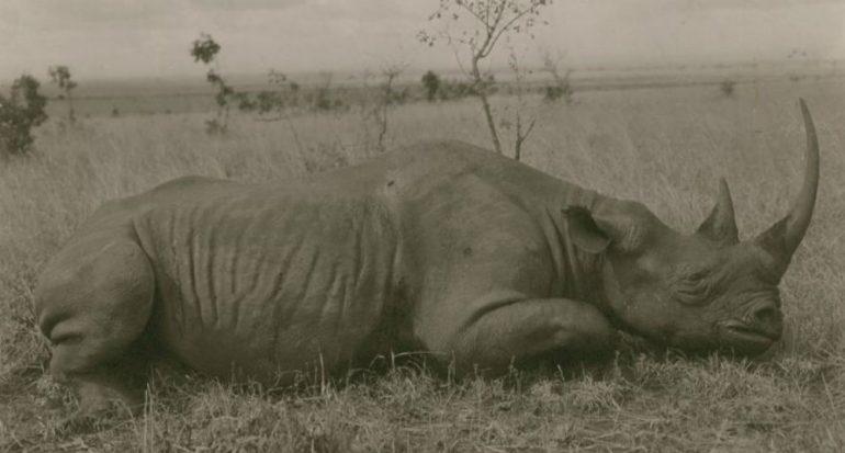 14 fotos de una especie cerca de la extinción