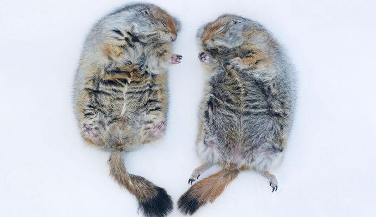 15 fotos de animales lindos que juegan en la nieve