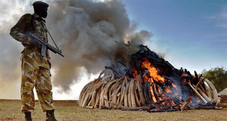 2016 podría marcar el cambio en la lucha por los elefantes