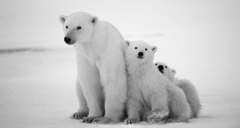 4 animales con formas increíbles para protegerse del frío