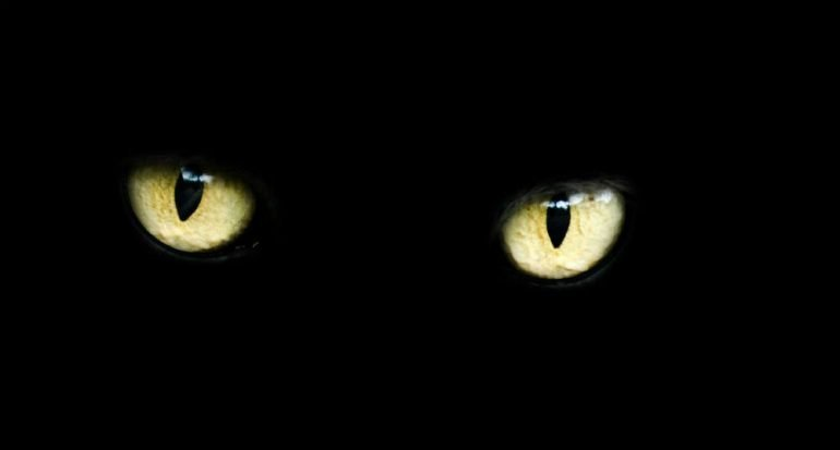 5 curiosas supersticiones sobre animales
