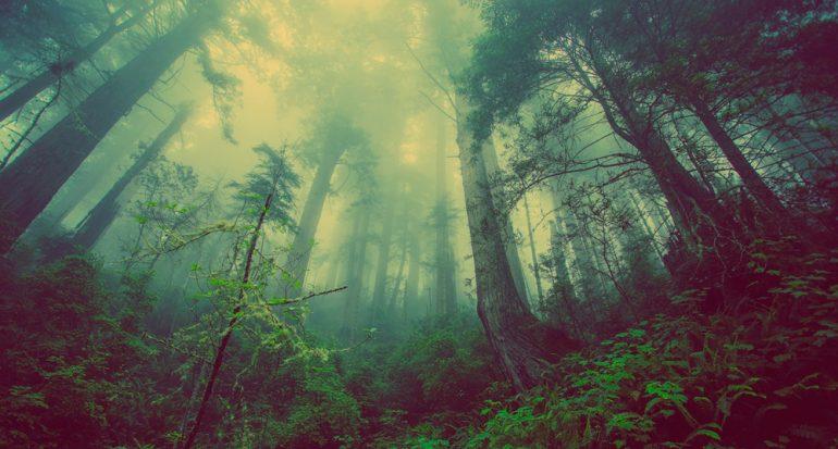 "5 lugares misteriosos para experimentar ""Stranger Things"""
