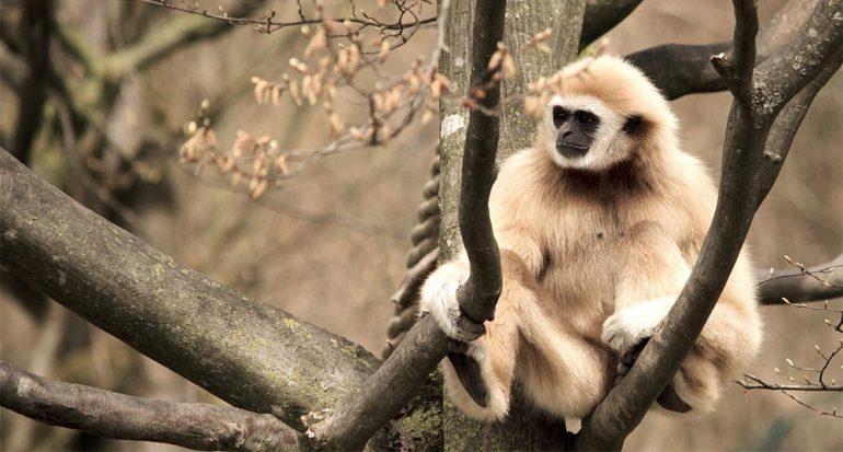 6 animales que viven en los árboles