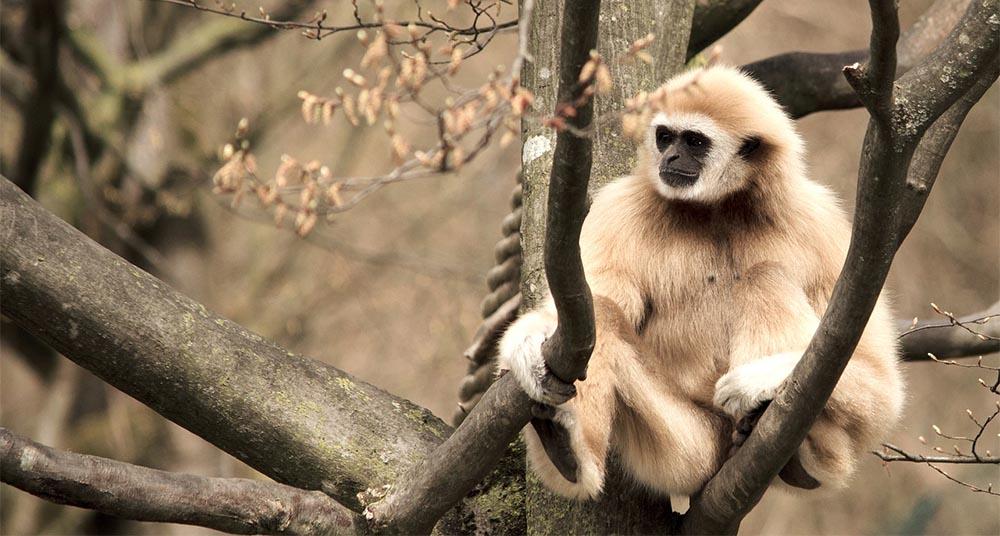 6 animales que viven en los rboles national geographic for Cuales son los arboles perennes