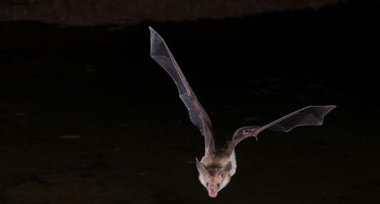 6 mitos sobre los murciélagos