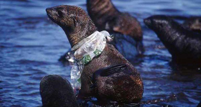 7 cosas que puedes hacer para ayudar a los animales y al planeta