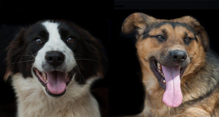 7 razones para adoptar un perro
