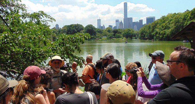 A la colecta de hierbas en Central Park
