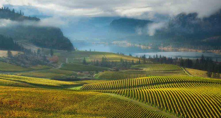 A la raíz del buen vino