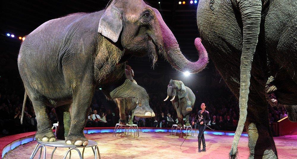 Resultado de imagen para animale circo
