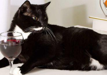 Ahora es posible poder compartir una copa de vino con tu mascota