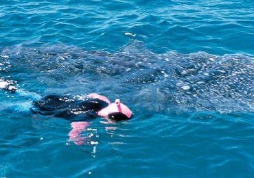 Al agua con el tiburón ballena