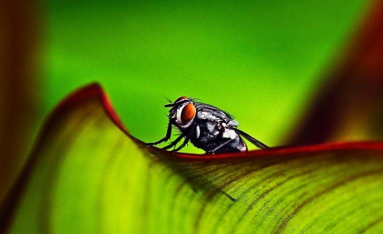 Alcohol; medicamento para las moscas