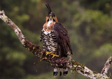 América Latina gana los 3 primeros lugares en la competencia de avistamiento de aves