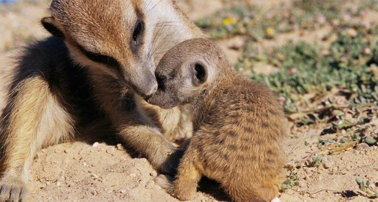 Animales que enseñan a sus hijos