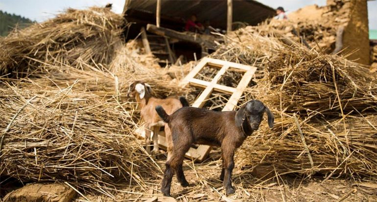Animales sobrevivientes en Nepal