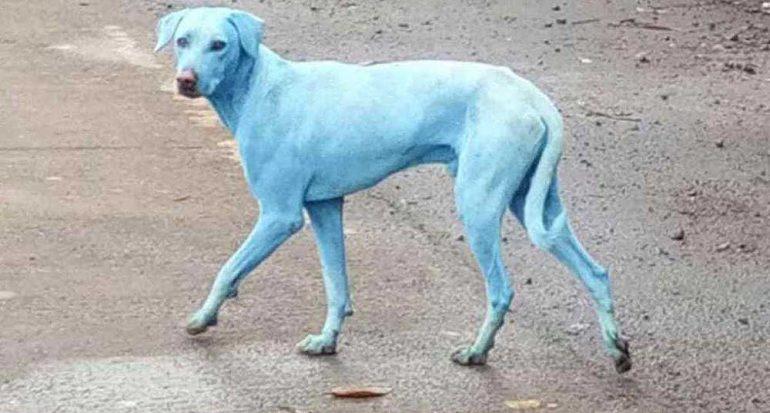 Aparecen perros de color azul en Mumbai