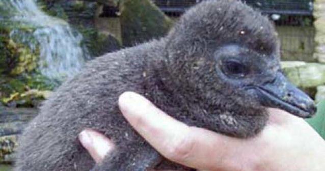 Aumenta el robo de animales en extinción en los zoológicos