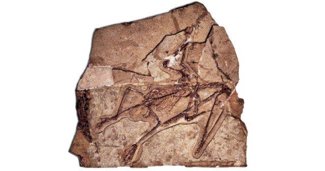 Aves del periodo jurásico