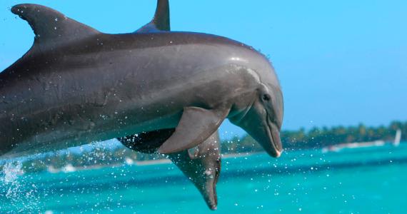 Avistan el momento en que unos delfines juegan con una ballena azul