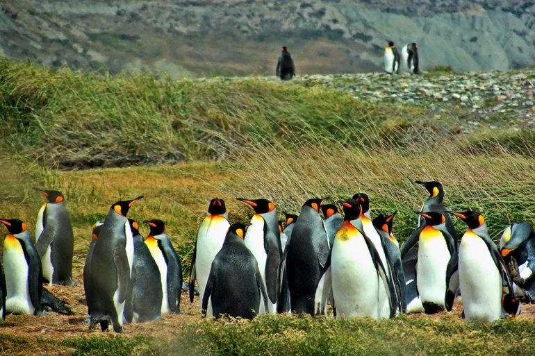 BLOG EN MOTO | Pingüinos en Tierra del Fuego