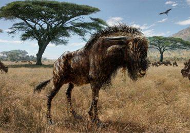 Bestia de la Edad de Hielo graznaba como dinosaurio