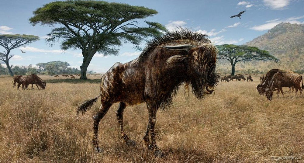 Bestia De La Edad De Hielo Graznaba Como Dinosaurio National Geographic En Espanol En esta ocasión, les tocará lidiar con varios dinosaurios. national geographic