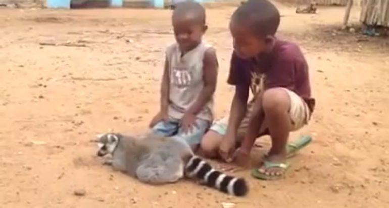 Cómo afectan los videos virales de animales la vida salvaje