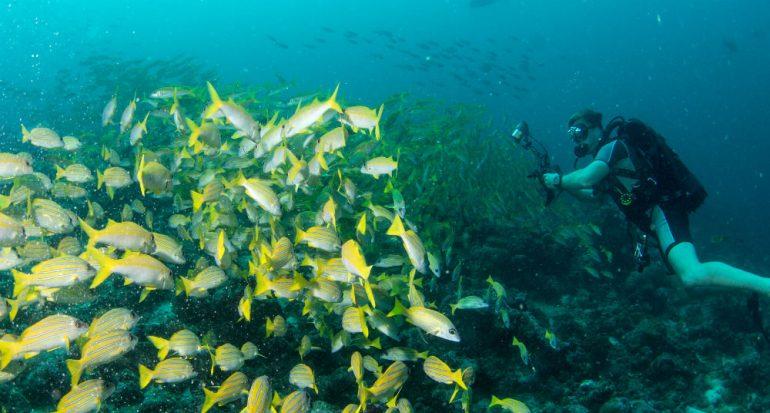 Cómo sacar fotografías bajo el agua