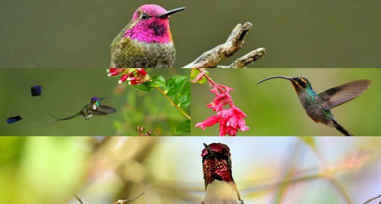 Cómo sobreviven al invierno los colibríes