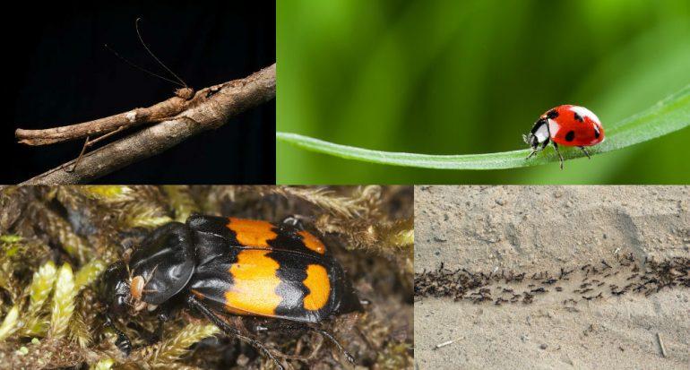 Cómo sobreviven los insectos (y cómo nos ayudan)