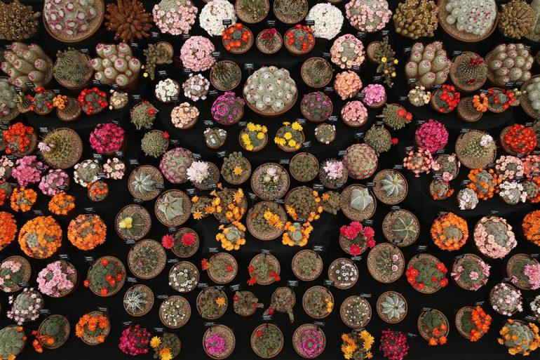Cactáceas de México