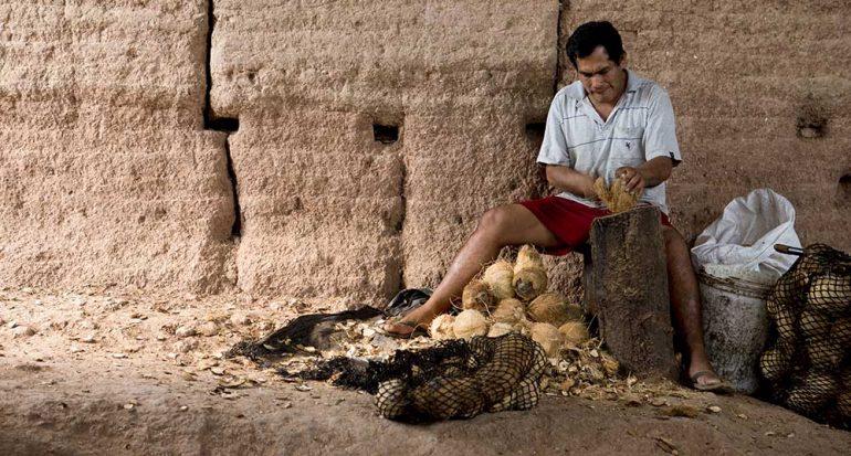 Carbón de coco: energía limpia y ecológica