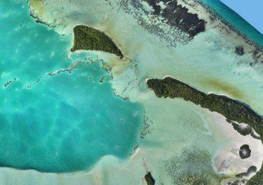 Cardúmenes de tiburones captados por drones