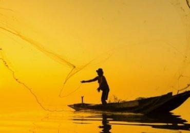 Ceviche de pescado/Odisea del sabor