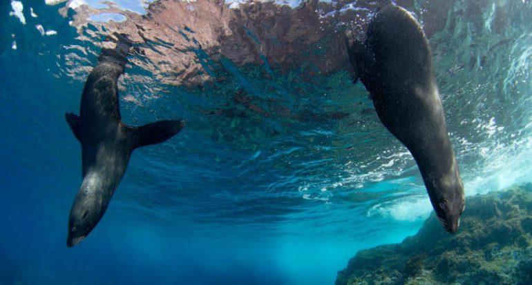 Chile crea la reserva marina más grande de las Américas