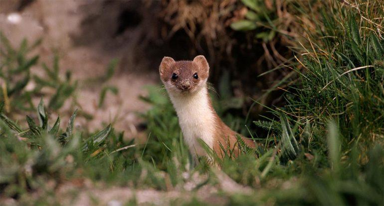 Cinco animales pequeños que se metieron con la ciencia grande